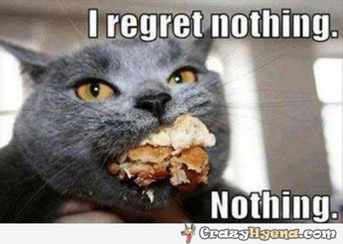 cat-regrets-nothing-fat-full-mouth-funny-picture